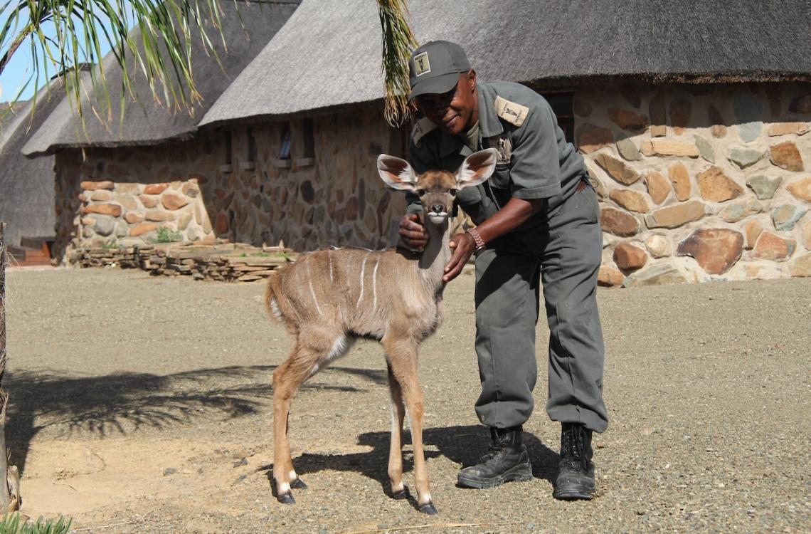 Farmens kæle Kudu